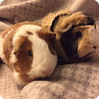 Adopt A Pet :: Page and Penny - Fullerton, CA