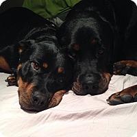 Adopt A Pet :: Buddy - Caledon, ON