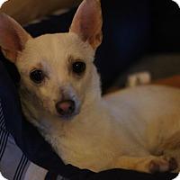Adopt A Pet :: STEWIE - Port Clinton, OH