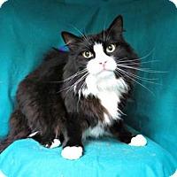 Adopt A Pet :: Erik - Merrifield, VA