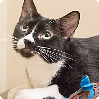 Adopt A Pet :: Maudie - Chicago, IL