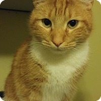 Adopt A Pet :: CHIPPER - Powder Springs, GA
