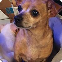 Adopt A Pet :: Lulu bonded with Chunk - Las Vegas, NV