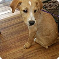 Adopt A Pet :: Frankie - Glen St Mary, FL