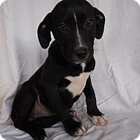 Adopt A Pet :: Frances - Oviedo, FL