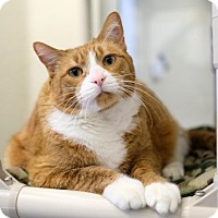 Adopt A Pet :: Sammie - Boise, ID
