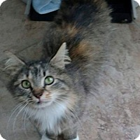 Adopt A Pet :: Fancy - Hockessin, DE