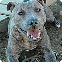 Adopt A Pet :: Cola - Blue Ridge, GA