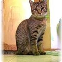 Adopt A Pet :: Beverly - Shelton, WA