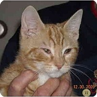Adopt A Pet :: Swreet William - Riverside, RI