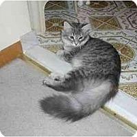 Adopt A Pet :: Sable - Toronto, ON