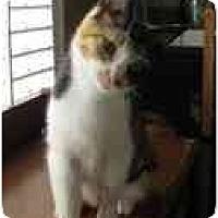 Adopt A Pet :: Abbie - Modesto, CA