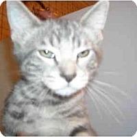 Adopt A Pet :: Elsie - Riverside, RI