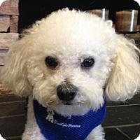 Adopt A Pet :: Bailey - La Costa, CA