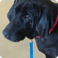 Adopt A Pet :: Mrs. Beasley - New Windsor, NY