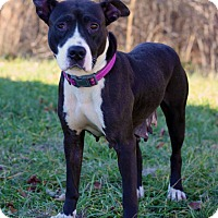 Adopt A Pet :: Nisa - Waldorf, MD
