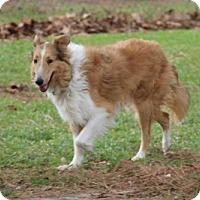 Adopt A Pet :: Dalton - Stafford, TX
