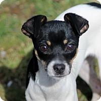 Adopt A Pet :: Louise - Liberty Center, OH