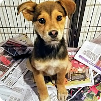 Adopt A Pet :: Twinkie(ADOPTED!) - Chicago, IL