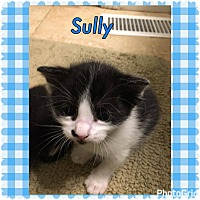 Adopt A Pet :: Sully - Jerseyville, IL