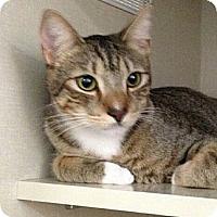 Adopt A Pet :: Anders - Chandler, AZ