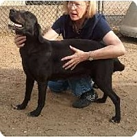 Adopt A Pet :: Scrappy - Courtesy post - Glastonbury, CT
