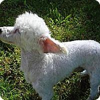 Adopt A Pet :: RALPH LAUREN - ROCKMART, GA