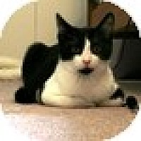 Adopt A Pet :: Henrie - Vancouver, BC