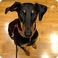 Adopt A Pet :: Quincy--adopted!! - New Richmond, OH