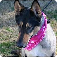 Adopt A Pet :: Roxy - Gardena, CA