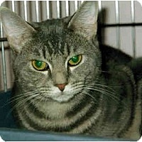 Adopt A Pet :: Misty - Medway, MA
