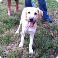 Adopt A Pet :: Charro - Kingwood, TX