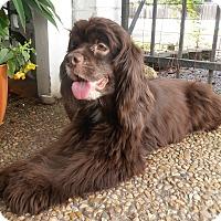 Adopt A Pet :: Jenna - Sugarland, TX