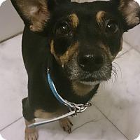 Adopt A Pet :: Sweet Sunday - Madison, NJ
