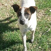 Adopt A Pet :: Ace - San Antonio, TX