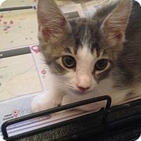 Adopt A Pet :: Keoni - San Ramon, CA