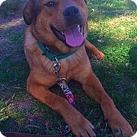 Adopt A Pet :: Sadie - Mission Viejo, CA