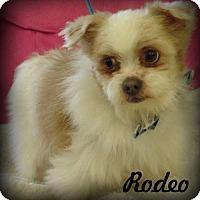 Adopt A Pet :: Rodeo - Anaheim Hills, CA