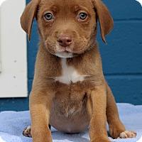 Adopt A Pet :: Lee - Waldorf, MD