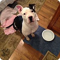 Adopt A Pet :: Patches (COURTESY POST) - Baltimore, MD
