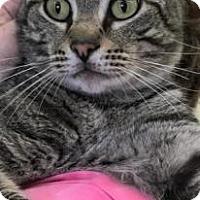 Adopt A Pet :: Hermes - Encinitas, CA