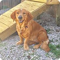 Adopt A Pet :: Aubrey - York, SC