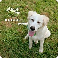Adopt A Pet :: Krosby - Pearland, TX