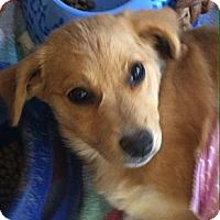 Adopt A Pet :: Jayden - Phoenix, AZ