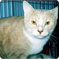 Adopt A Pet :: Duffy - Medway, MA