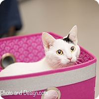 Adopt A Pet :: Priscilla - Fountain Hills, AZ