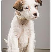 Adopt A Pet :: Willie - Owensboro, KY