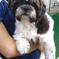 Adopt A Pet :: Brewster - Sacramento, CA