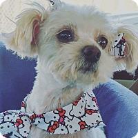 Adopt A Pet :: Zoey - Covina, CA