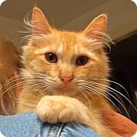 Adopt A Pet :: Butterfield - Davis, CA